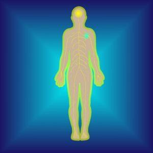 Rolfing and Change in The Human Body